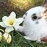 Великденско зайче