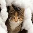 Коте в снега